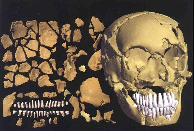 Wie sah der Neandertaler aus?