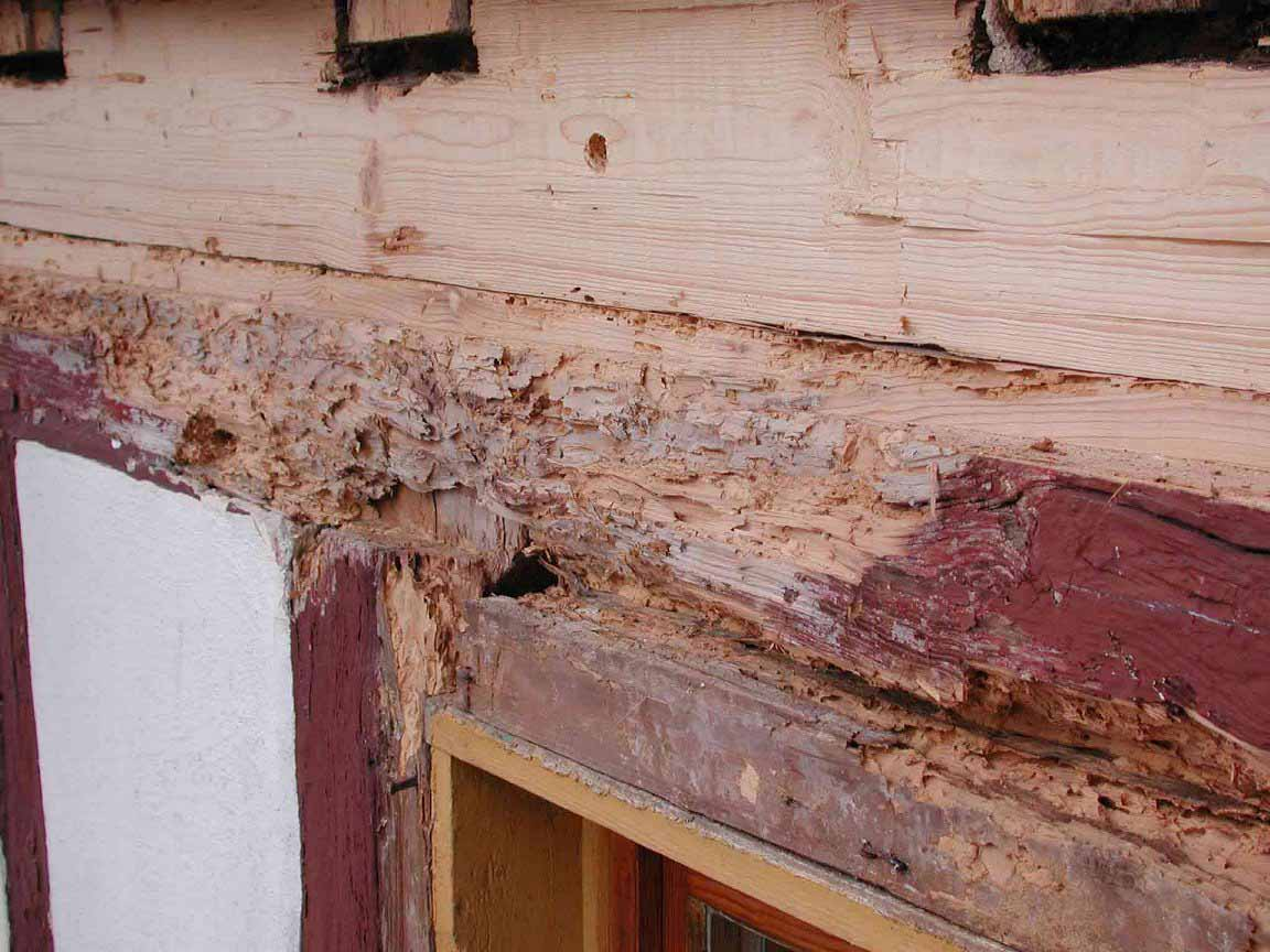 Erfahrungen bei der renovierung